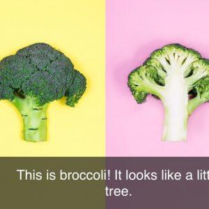 Brocolli ebook